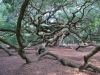 angel-oak-ground