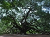 angel-oak-south-carolina